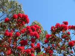 A splash of colour at Logan Botanic Gardens