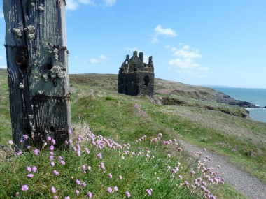Dunsky Castle wild flowers