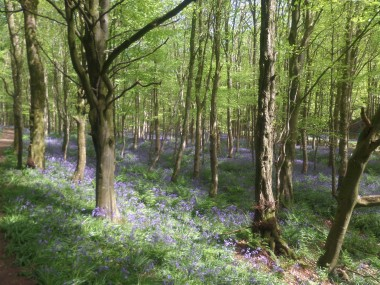 Dunskey Woodland Portpatrick